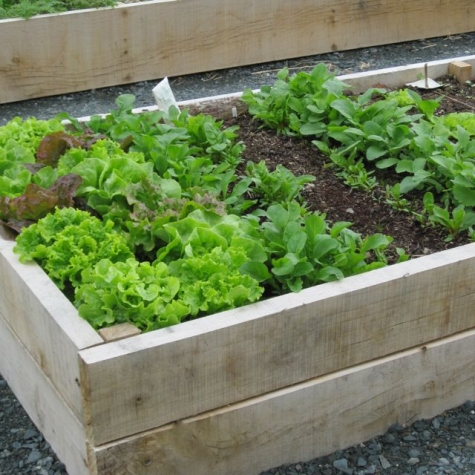 Why Not Try A Raised Box For Growing Vegetables